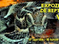 Expoziţie de reptile vii, la Complexul Muzeal de Ştiinţele Naturii. În premieră, gălăţenii pot admira un caiman din Amazon