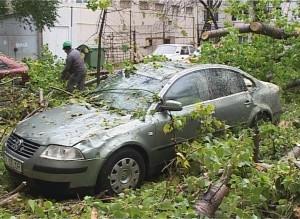 GALERIE FOTO: Două mașini au fost distruse după ce un copac s-a prăbușit peste ele