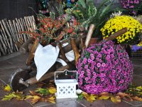 Alternativă la acest sfârșit de săptămână. Mii de crizanteme așteaptă să fie admirate, la Grădina Botanică din Galați