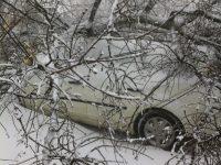 Copac căzut peste două maşini, lângă Parcul Eminescu