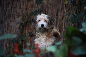 Impresionat de Max, câinele-erou, doctorul Gingărașu vă diagnostichează  gratuit câinele pentru dirofilarioza