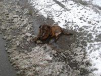 Slalom printre pete maronii canine