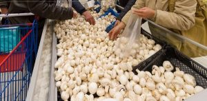 ciuperci-supermarket-ovidiu-iordachi