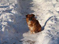 Frigul și zăpada – pericole pentru sănătatea animalelor de companie. Măsurile ce trebuie luate pentru a preveni efectele