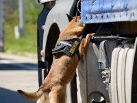 Poliţiştii cu patru picioare ai Poliţiei de Frontieră gălăţene