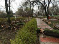 FOTOGALERIE: Vremea ploioasă şi vântul puternic răpun copacii din oraş