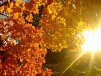 VREMEA: Va fi cald săptămâna aceasta, dar de săptămâna viitoare vin ploile