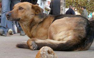 Pe Strada Strungarilor: Amendă de 1500 lei pentru îngrijirea câinilor în spaţii improvizate