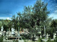 """FOTOGALERIE: Periplu italian: de la Museo dei Bozzetti la """"grădina cu îngeri"""""""