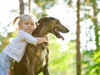 Arca lui Noe. Motive pentru adopția câinilor și pisicilor senior (în vârstă), mai ales pentru copii