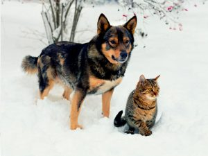 Arca lui Noe. Să evităm riscurile a 5 pericole mortale pentru animalele de companie în timpul iernii