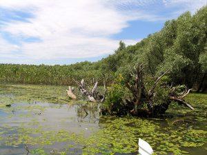 Balta Vlascuta din Parcul National Lunca Prutului 794x595