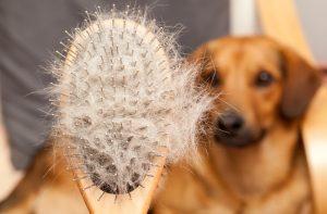 Arca lui Noe. Șapte semne ale alergiilor sezoniere la animalele de companie