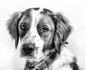 Arca lui Noe. Primul ajutor în intoxicații la câine după ingestia unor substanțe periculoase pentru sănătate