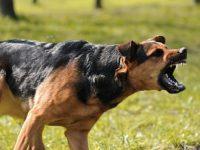 Paznic sfâşiat de câini pe platforma industrială de la marginea Tecuciului