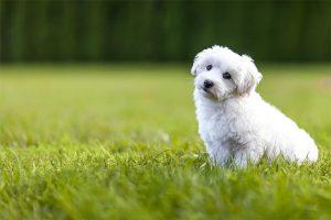site de matrimoniale câini