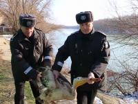 VIDEO. Pe malul Siretului a fost găsit un pui de pelican rănit. Polițiștii locali l-au dus la Zoo Gârboavele