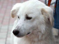 Primăria a demarat o nouă campanie de sterilizare gratuită și microcipare a câinilor din curțile gălățenilor